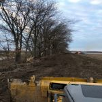 Tree Clearing Project